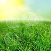 Fondo verde natute — Foto de Stock