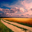 Ground road at sunset — Stock Photo