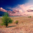 Tree on the brown field — Stockfoto