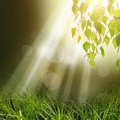 Hojas de árbol verde fondo — Foto de Stock
