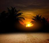 Le palme al tramonto sull'oceano — Foto Stock