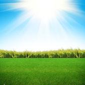 Hierba verde en el campo — Foto de Stock