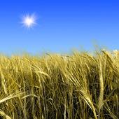 Green meadow under blue sky — Stock Photo