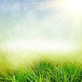 Zelená příroda pozadí — Stock fotografie