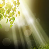 Green tree leafs background — Stock Photo