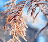 Christmas tree at winter — Stock Photo