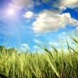Green field with the sky — Stock Photo