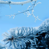 Albero innevato nella foresta invernale — Foto Stock