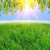 绿树枫叶背景 — 图库照片