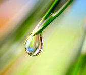 Gota de agua sobre el fondo verde — Foto de Stock