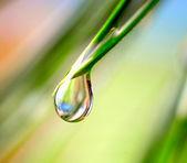 Goutte d'eau sur le fond vert — Photo
