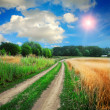 Ground road in the fields — Stock Photo