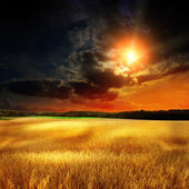 Yellow field eith sky — Stock Photo