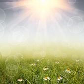 Gröna naturen bakgrund — Stockfoto