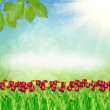 Spring tulips on nature background — Stock Photo