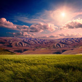 Summer field with mountians — Stock Photo