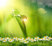 Goccia d'acqua sullo sfondo verde — Foto Stock