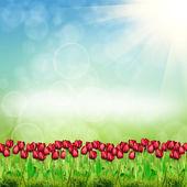 Spring tulips on nature background — Stock Photo