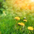 Stock Photo: Yellow flowers with sky
