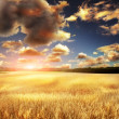Yellow field eith sky — Stock Photo