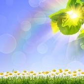 Groene zomer aard achtergrond — Stockfoto