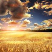 Cielo eith campo amarillo — Foto de Stock