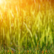 Green grass on field — Stock Photo #27484789