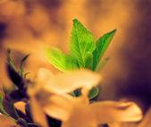 Zelené listy v žluté květy — Stock fotografie
