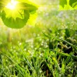 Green summer nature background — Stock Photo