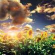 Yellow sunflower with the sky — Stock Photo