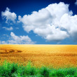 Summer landscape with the sky — Stock Photo
