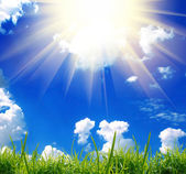 Green grass with the sky — Stock Photo