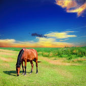 Horse on the green field — Stock Photo