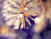 Beautifull christmass tree — Stock Photo