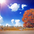 the colored autumn tree on the landscape — Stock Photo