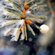 Stock Photo: Beautifull christmass tree