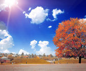 The colored autumn tree on the landscape — Foto de Stock