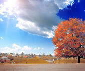 The colored autumn tree on the landscape — Foto Stock