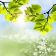The green leaves and sun on blue sky — Stock Photo