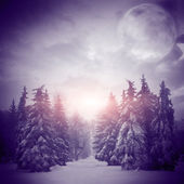 Beautiful winter landscape with Christmass trees — Foto Stock