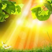 Arka planı yeşil ağaç yapraklar — Stok fotoğraf