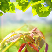 Green summer nature backgroung with leaves — Stock Photo