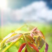 Summer nature — Stock Photo