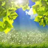 Green leaves and sun on blue sky — Stock Photo