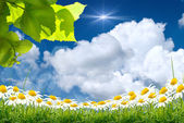 Feuilles vertes et soleil sur ciel bleu — Photo