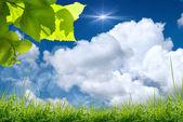 Yeşil yaprakları ve mavi gökyüzü güneş — Stok fotoğraf