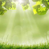 Groene bladeren en zon op blauwe hemel — Stockfoto