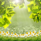 Foglie verdi e il sole sul cielo blu — Foto Stock