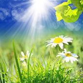 Grüner Natur Hintergrund im Sommer — Stockfoto