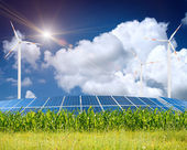 Green grass on the field with sky — Stock Photo